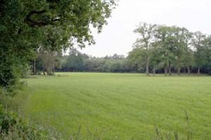 Bij landgoed Twickel
